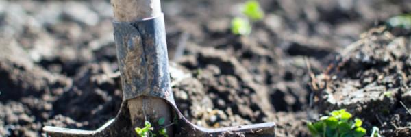 biocposts11 - Biochar in Agriculture enhances environmental Outcomes